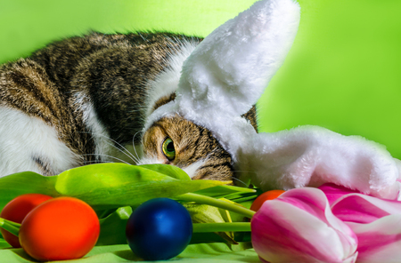 cat with overhead ears depicts an Easter rabbit among the flower