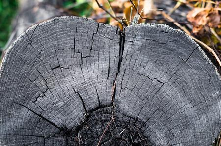old gray wooden stump close up Stok Fotoğraf - 113306396