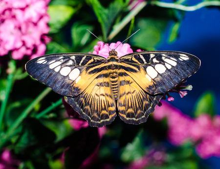 bright black yellow big butterfly sits spread its wings on a art
