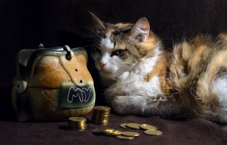evil cat on a dark brown background sits next to the piggy bank
