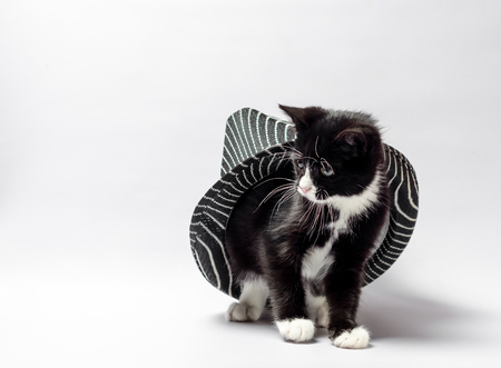 little cat kitten with white and black fur peeking out from under the hat