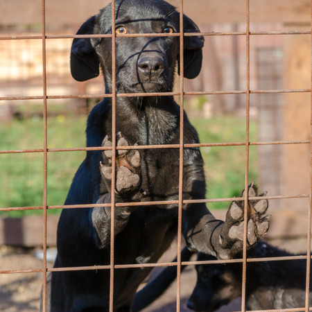 black mongrel puppy came paws on the lattice