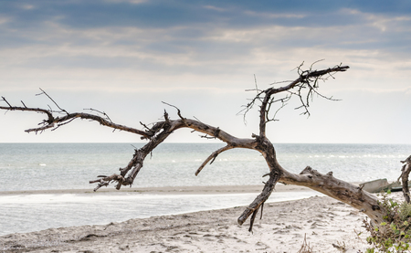seascape with a dried tree in the foreground Imagens