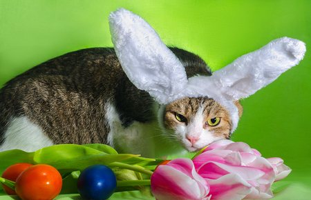 cat with overhead ears depicts an Easter rabbit among the flowers of pink tulips and colorful eggs on a bright green background