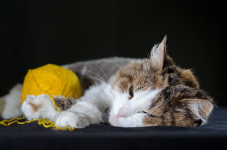 tricolor cat sleeping hugging a ball of bright yellow yarn