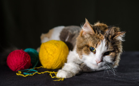 tricolor cat hugging a balls of bright yellow red blue yarn