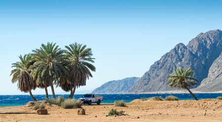 car under the palm trees on the Red Sea on the background of the rocky mountains in Egypt