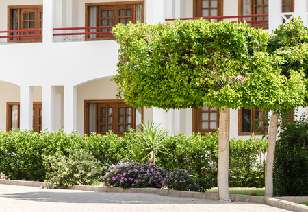 green shorn trees and bushes against the backdrop of a hotel house in Egypt Stok Fotoğraf