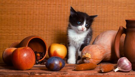 rural still life with a black and white color kitten looks at the garlic in surprise