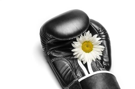 boxing glove with a large chamomile flower closeup