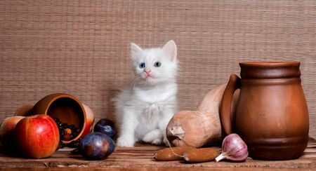 autumn still life white blue-eyed fluffy white kitten sitting on a wooden table in the clipping of vegetables fruits and clay mugs Stock Photo