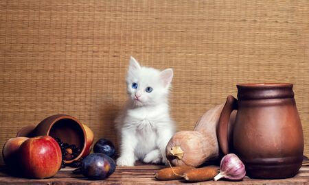autumn still life white blue-eyed fluffy kitten sitting on a wooden table in the clipping of vegetables fruits and clay mugs