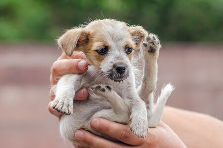 male hands are holding little puppy 免版税图像