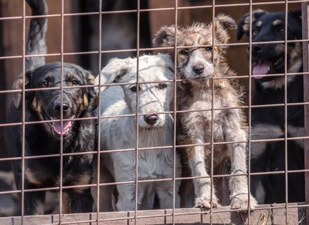 four puppies behind bars in a cage