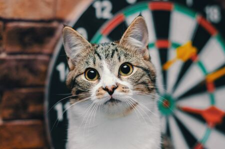 portrait of a tabby cat against the background of a circle of darts