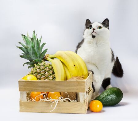 little kitten with black and white fur and green eyes with exotic fruits pineapple banana coconut avocado and orange Фото со стока