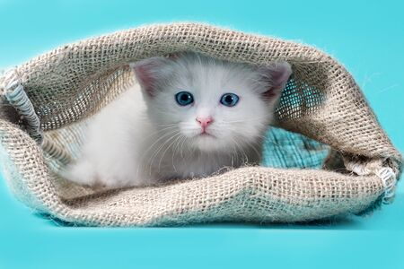 cat in a sack turquoise background