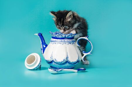 fluffy tabby kitten peeks into a ceramic teapot on a turquoise background 写真素材