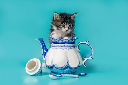 fluffy tabby kitten sit near a ceramic teapot on a turquoise background