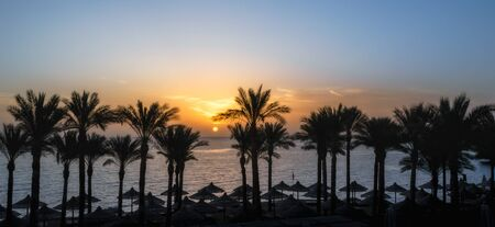 landscape dawn palm trees and a beach with umbrellas in Egypt in Sharm El Sheikh
