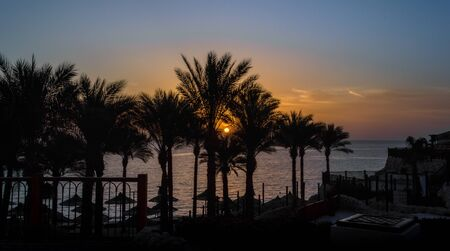 landscape dawn sky palms and hotel in egypt in Sharm El Sheikh