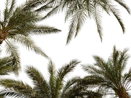 pattern of palm branches on a white background in Egypt in Sharm El Sheikh