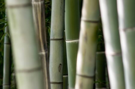 botanical pattern green bamboo garden closeup