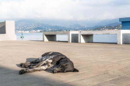 spotted dog resting sleeps on the promenade in Georgia in Batumi