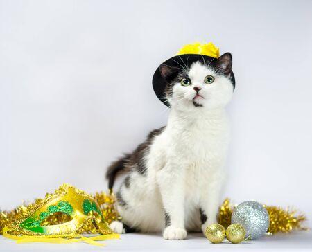 black and white kitten in fancy dress hat Stok Fotoğraf