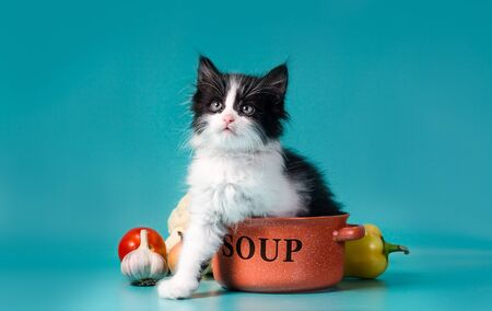 cooking black and white fluffy little kitten next to an orange bowl and vegetables Reklamní fotografie