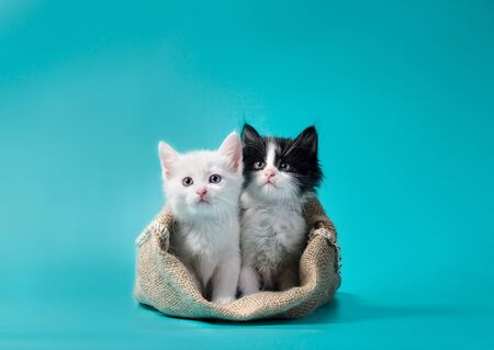 two little kittens in a sack turquoise background