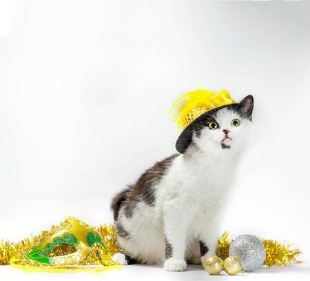 black and white kitten in christmas fancy dress hat