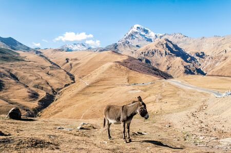 background landscape donkey by the cliff with a snowy peak in Georgia on an autumn day