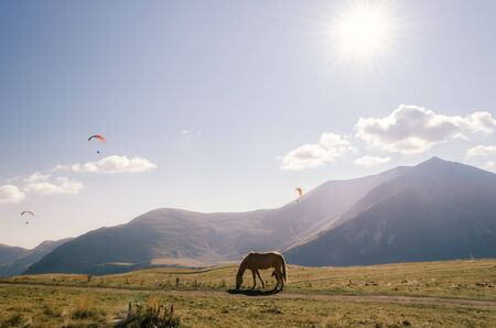 background landscape horse near the mountain and paratroopers in the sky in Georgia on an autumn day