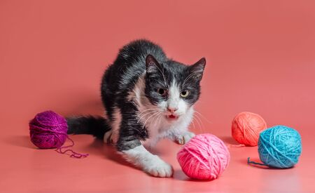 veterinarydisabled cat with amputated forepaw among balls of woolen thread on a pink background