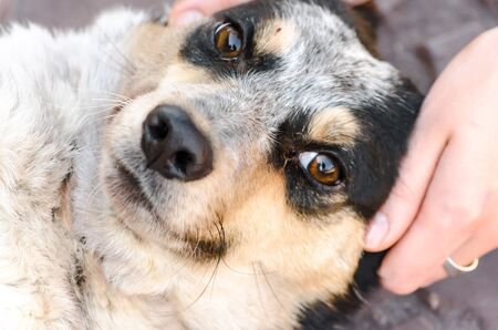 pet care head of a mongrel stay dog in female hands
