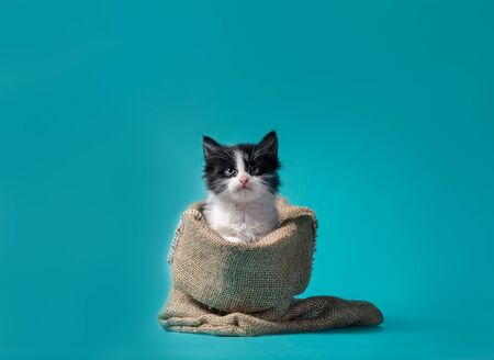 little kitten in a sack turquoise background