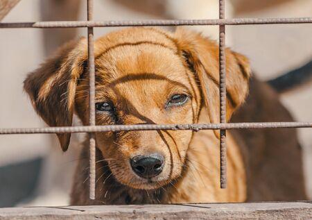 rasowy beżowy szczeniak w drewnianej klatce