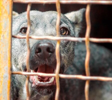 portrait of a mongrel dog with sad eyes in an iron cage behind bars close up