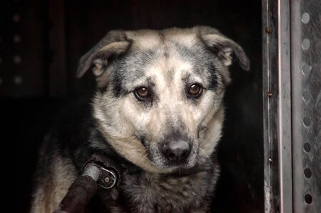 old stray dog with sad eyes in a shelter Stock Photo