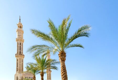high mosque and green palm trees against a clear blue sky in Sharm El Sheikh Egypt Standard-Bild - 140263135