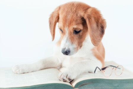 white-red-haired puppy with long ears reads a large green paper book