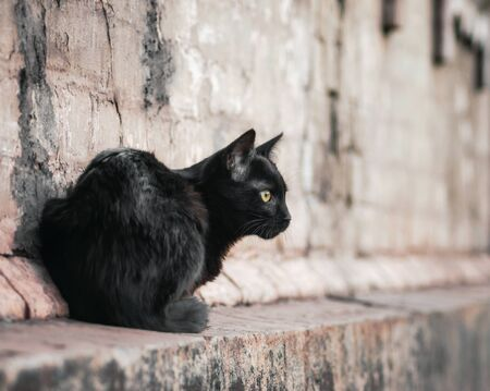 street black cat sits near an old brick house and watches close up