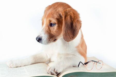 white-red-haired puppy with long ears lays a large green paper book