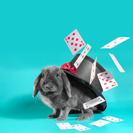 Gray dwarf rabbit under a hat with a cylinder and flying cards on a turquoise