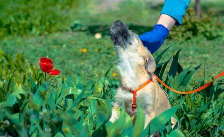 man in blue veterinary uniform stroking puppy sitting in green grass