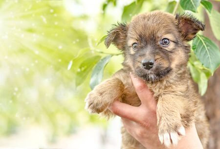 pet care pooch puppy in a female hand on a background of green poplar leaves Фото со стока