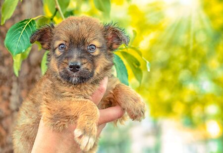 pet care pooch puppy in a female hand on a background of green poplar leaves Stok Fotoğraf