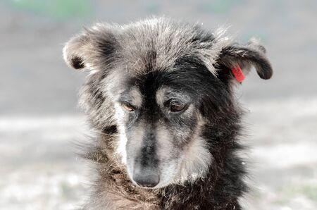 portrait of a very sad pooch dog