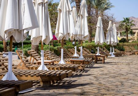 row of wooden shizlongov with folded white umbrellas with plants and palm trees